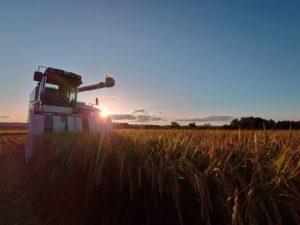 稲刈り202109114